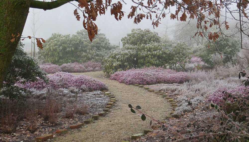winterbeeld van gebogen pad richting heidetuin
