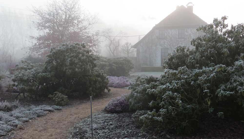 rijp op rododendrons in viller the garden