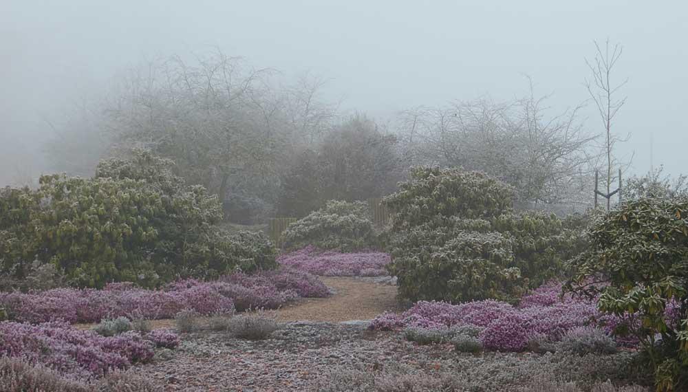 heidetuin in de mist