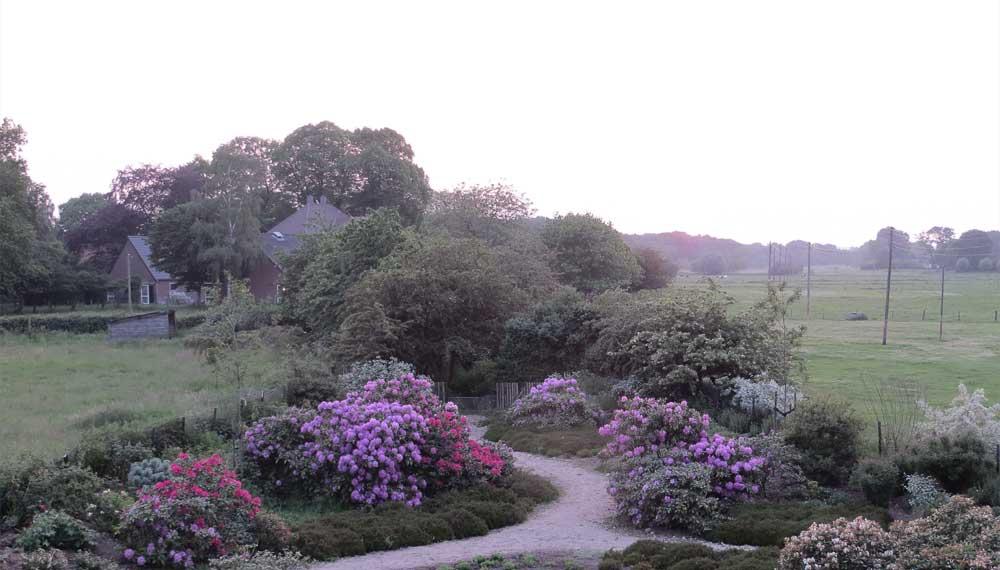 bloeiende rododendrons bij avondlicht in viller the garden