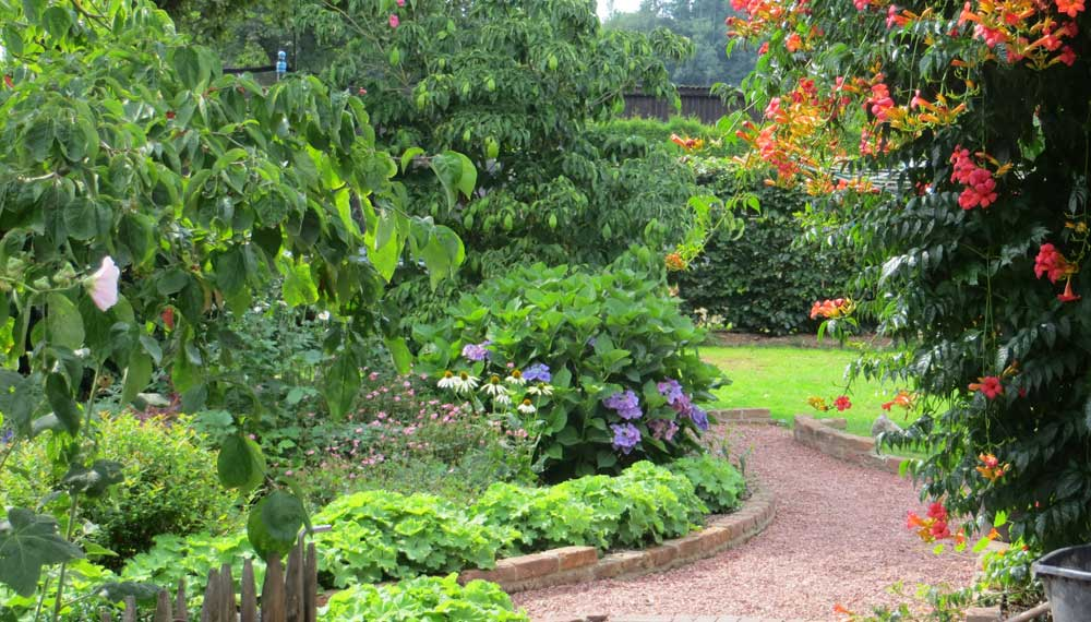 mooi doorkijkje in cottagetuin met bloeiende campsis en hortensia