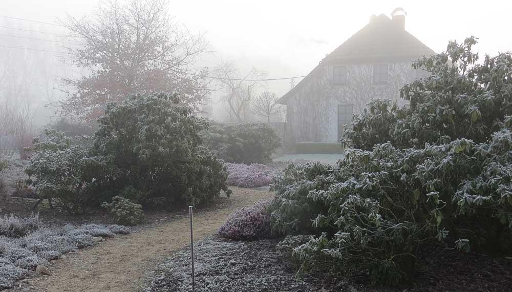 heide tuin met rododendronstruiken in de mist