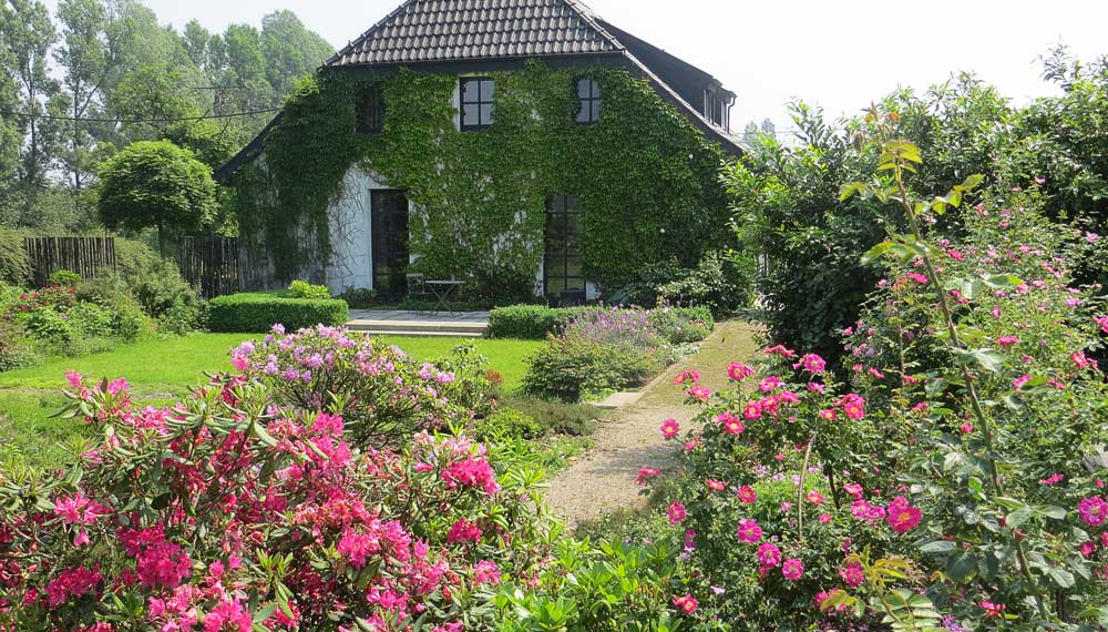 blik op huis en gazon met roos op voorgrond